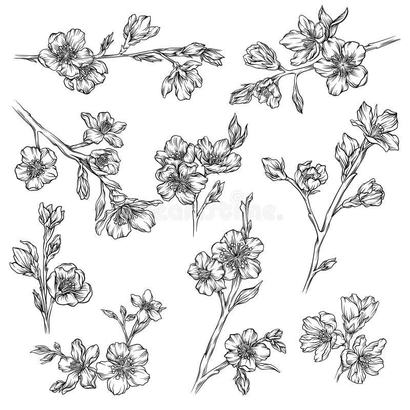 Blomma- och växtsamlingen, monokromma beståndsdelar för den blom- designen räcker utdragna vektorillustrationer vektor illustrationer