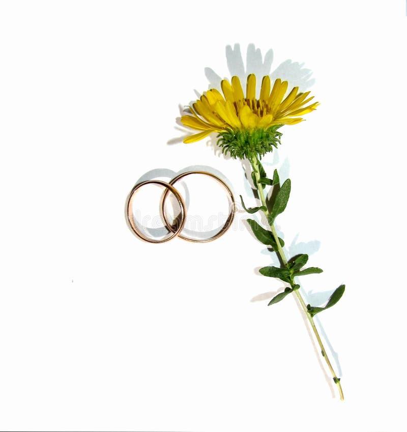 Blomma och vigselringar arkivfoto