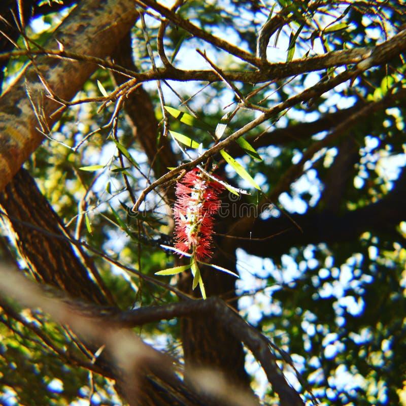 Blomma på ett träd arkivbild