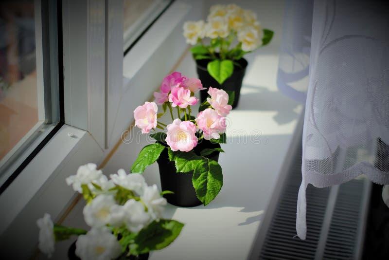 Blomma på fönstret arkivfoton