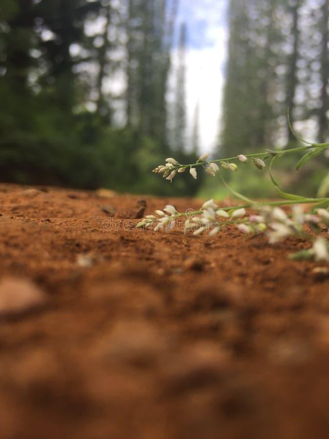 Blomma på grusvägen arkivfoton