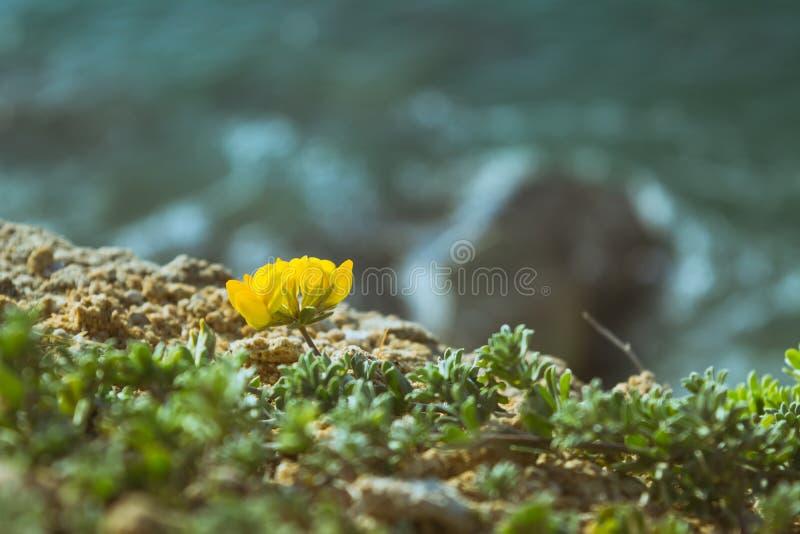 Blomma på kanten av Cliff Spain arkivbilder