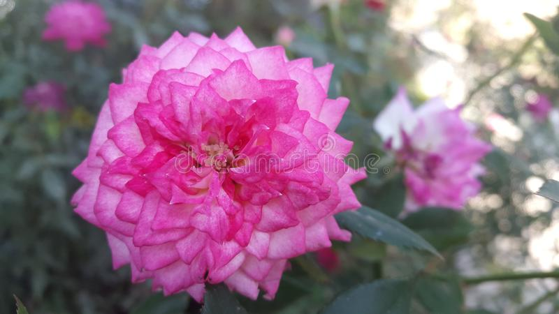Blomma på lantgården arkivbild