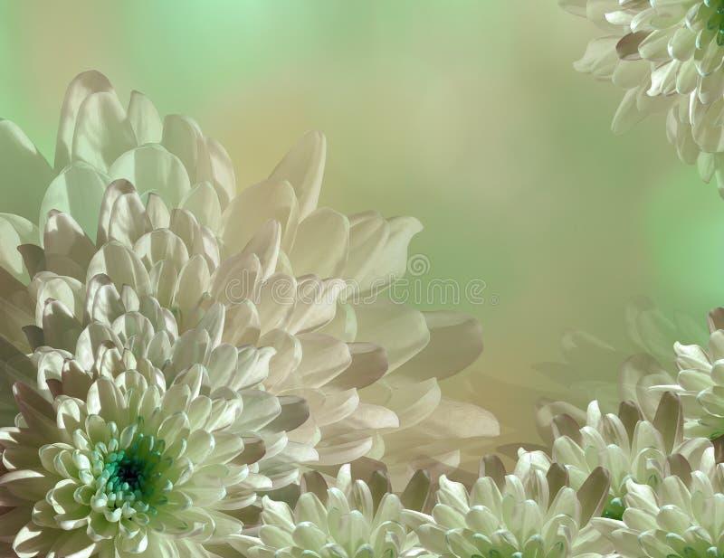 Blomma på oskarp turkos-gräsplan-rosa färger bakgrundshalvton Krysantemum för blåvita blommor blom- collage vita tulpan för blomm arkivfoton