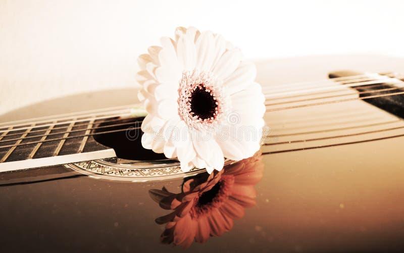 Blomma på rader, närbild arkivbild