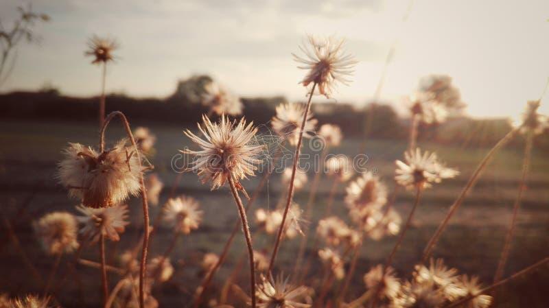 Blomma på solnedgång arkivfoton