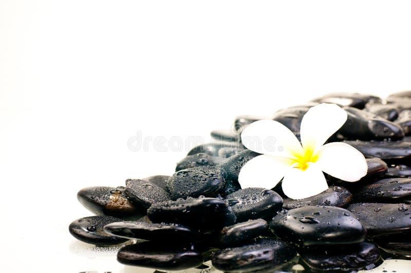 Blomma på våta svarta zenstenar fotografering för bildbyråer