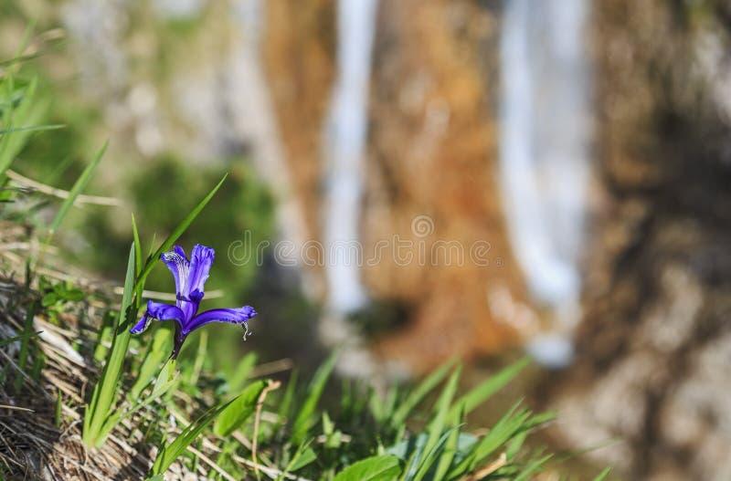 Blomma på vattenfallet fotografering för bildbyråer