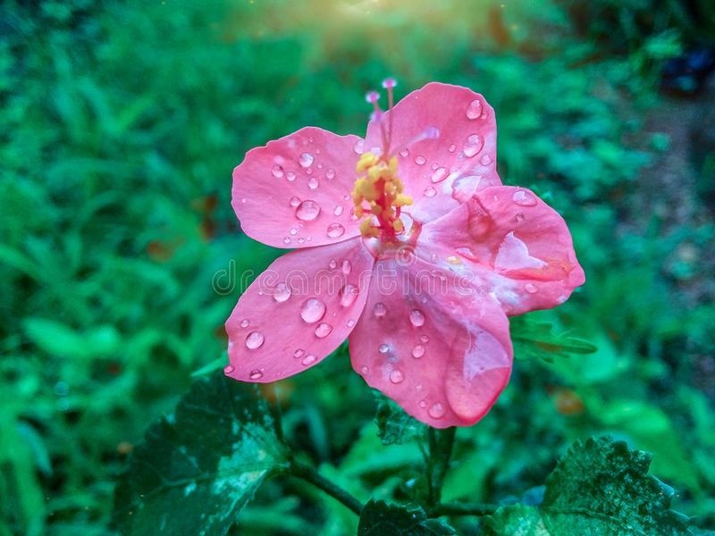 Blomma p? en regnig dag arkivfoton