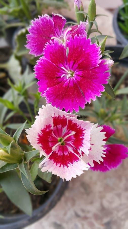 blomma red arkivfoto