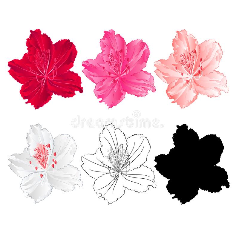 Blomma rhododendronbergbusken som är röd som är rosa, ljus - rosa färg, vit, översikten och konturn på en vit bakgrundstappningbl stock illustrationer