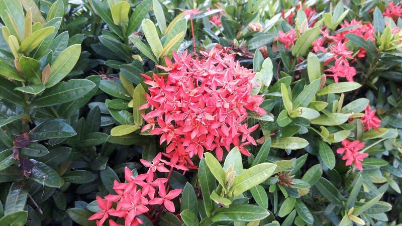 Blomma skönhetfläcken på naturens framsida royaltyfria bilder
