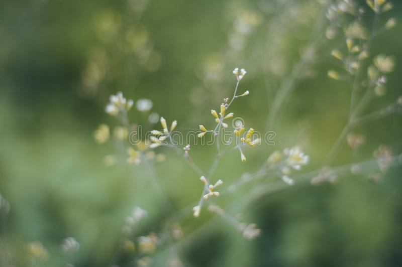 Blomma små blommor fotografering för bildbyråer