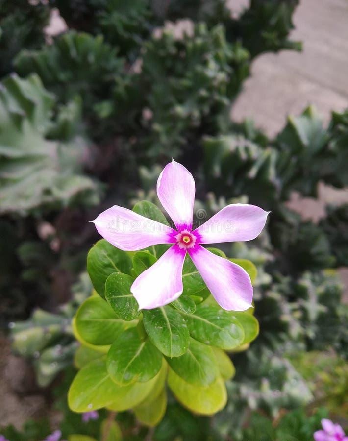 Blomma som blommar i naturen arkivfoto