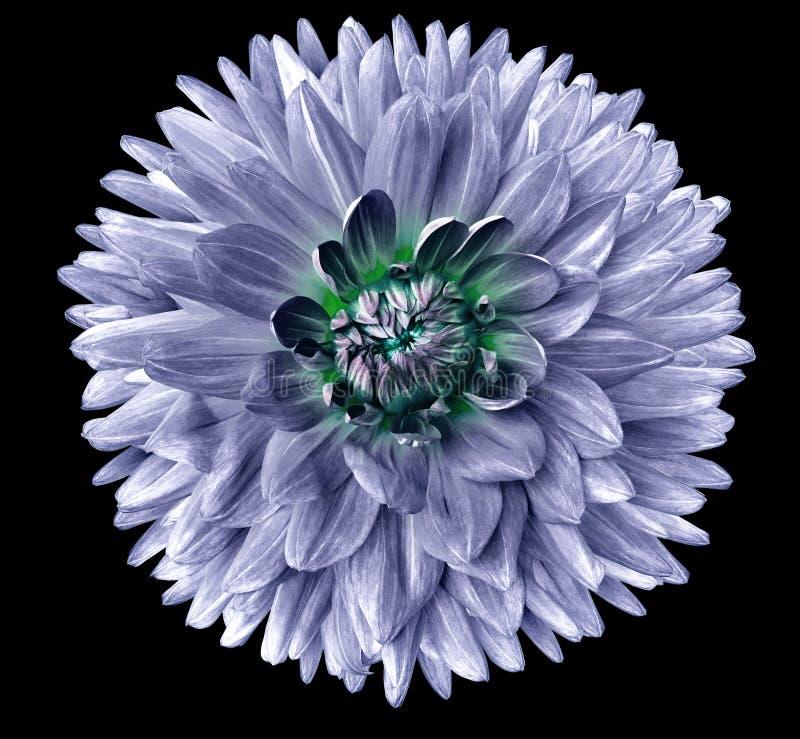 Blomma som isoleras på svart bakgrund För design closeup Mer klar fokus fotografering för bildbyråer