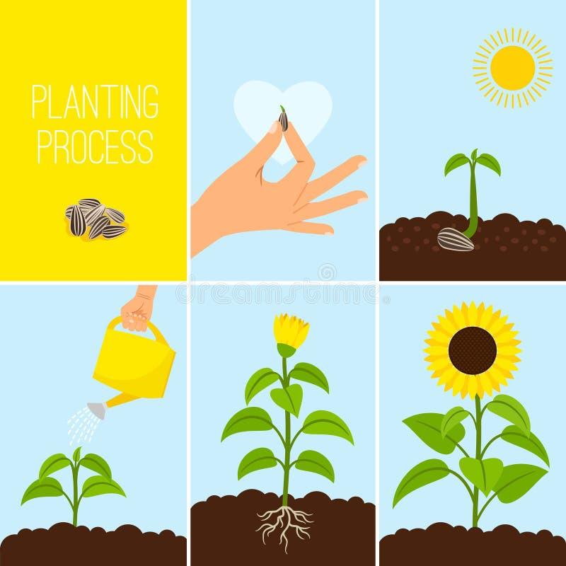 Blomma som planterar process royaltyfri illustrationer
