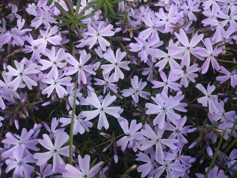 Blomma-stjärnor royaltyfri bild