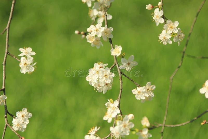 blomma trädgård royaltyfri bild