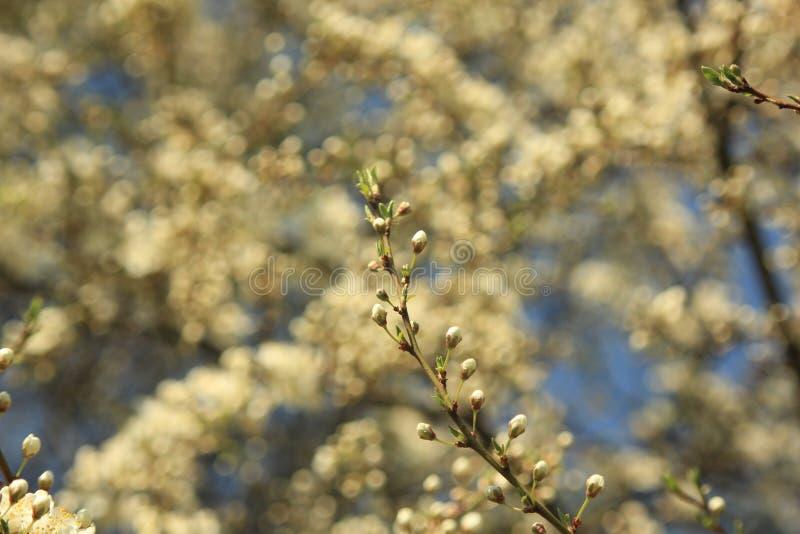 blomma trädgård royaltyfria bilder