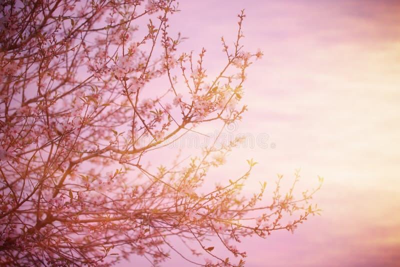 Blomma tree över solnedgång arkivfoto