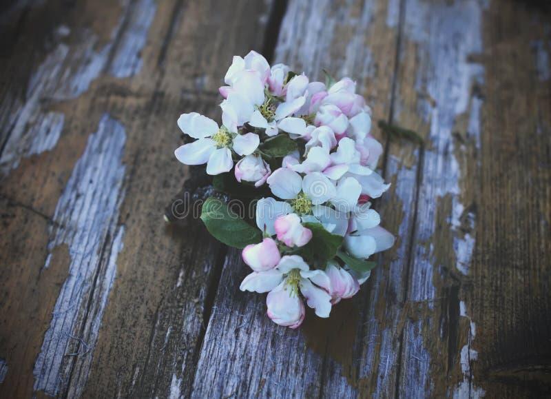 Download Blomma tree för äpple arkivfoto. Bild av fatta, blom - 78726188