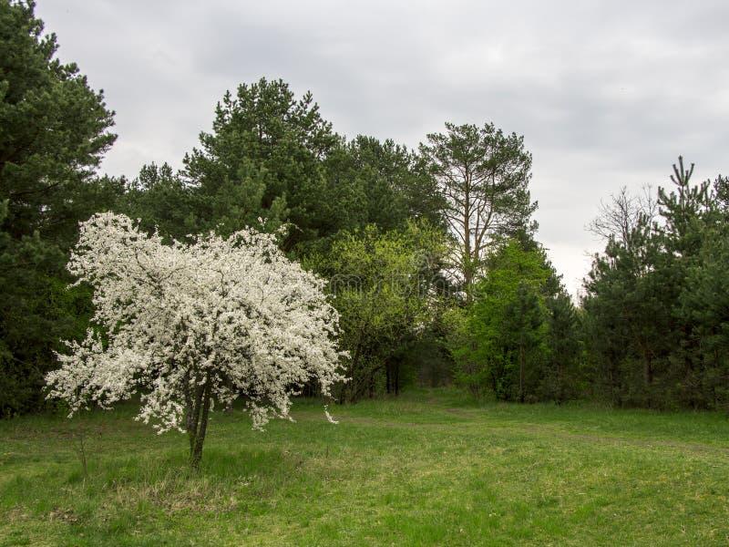 blomma treewhite HÄRLIGT ABSTRAKT LANDSKAP arkivfoto