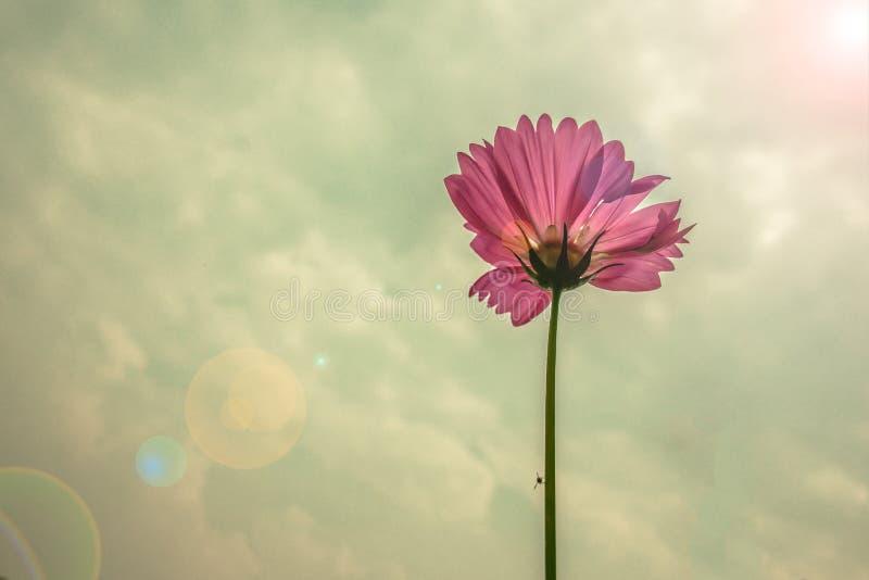 blomma under himlen royaltyfri foto