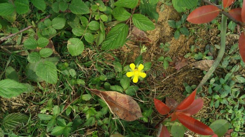 Blomma växten för härligt rött för prakten för våren den älskvärda gröna lyckligt liv för lynnet arkivbilder
