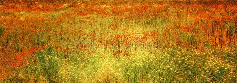 Blomma vallmo i äng, blommig äng med örter och sommarblommor, Tuscany, Italien arkivfoto