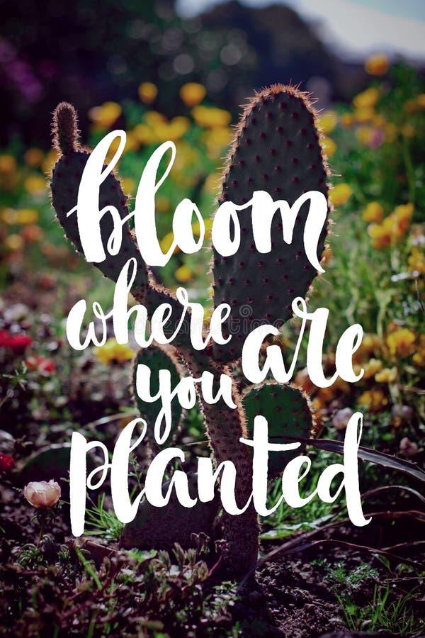 blomma var du är det planterade hand-skriftliga citationstecknet royaltyfria bilder