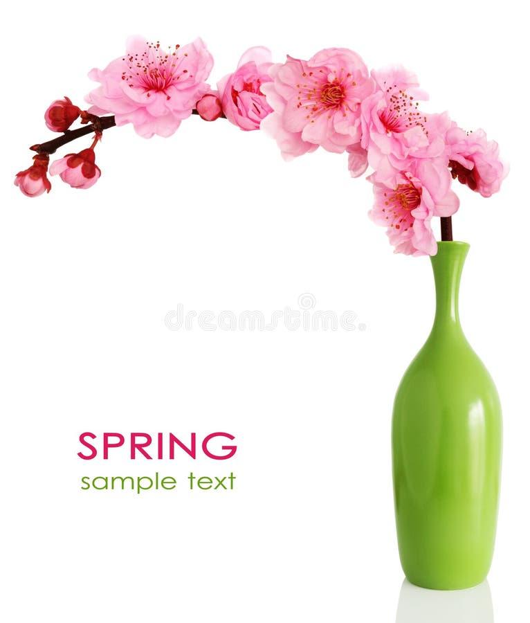 blomma vase för filialCherryfjäder royaltyfria foton