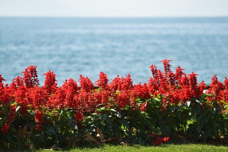 Blomma vid havet royaltyfria foton