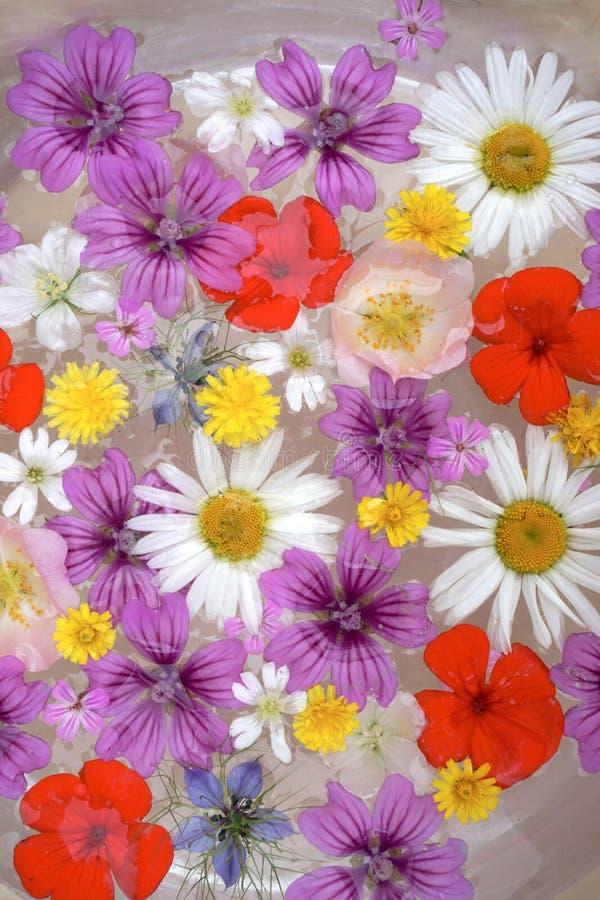 Blommaarrangment royaltyfri fotografi