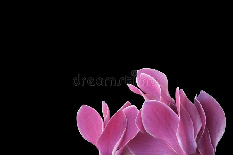 blommaavstånd royaltyfri foto