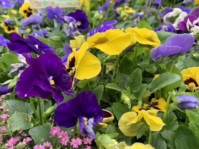Blommabakgrund i arbeta i trädgården för rengöringsduk royaltyfri foto