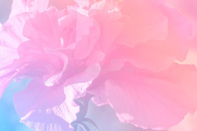 Blommabakgrund med ett pastellfärgat kulört royaltyfri bild