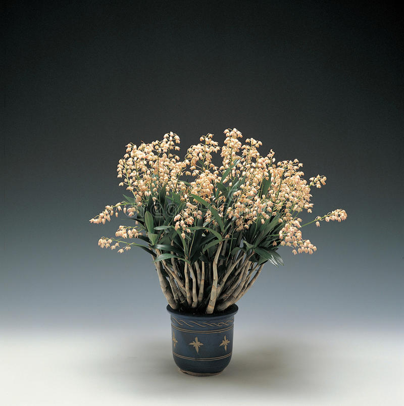 Blommabild arkivfoton