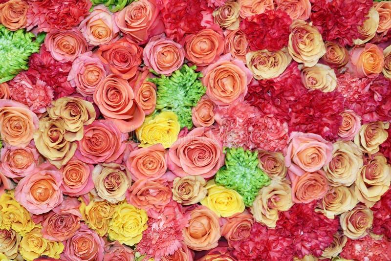 Blommabild av rosor arkivbild
