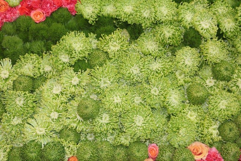 Blommabild av rosor royaltyfria bilder