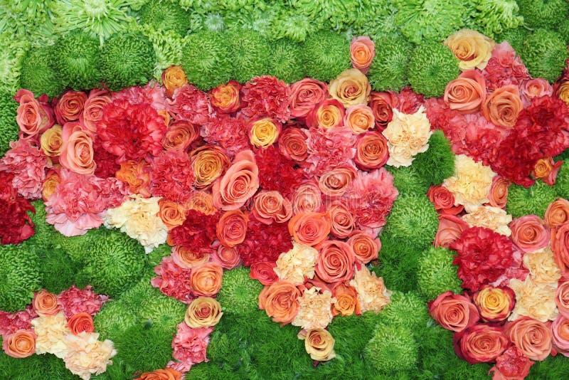 Blommabild av rosor royaltyfri fotografi