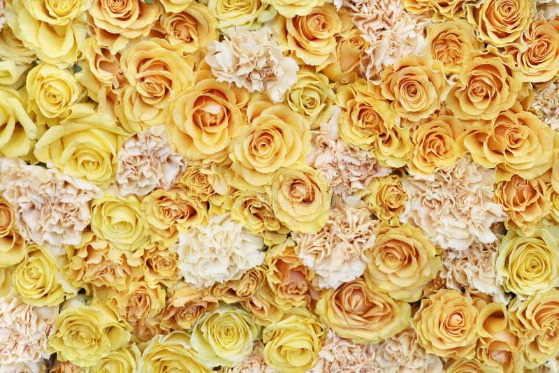 Blommabild av rosor royaltyfria foton