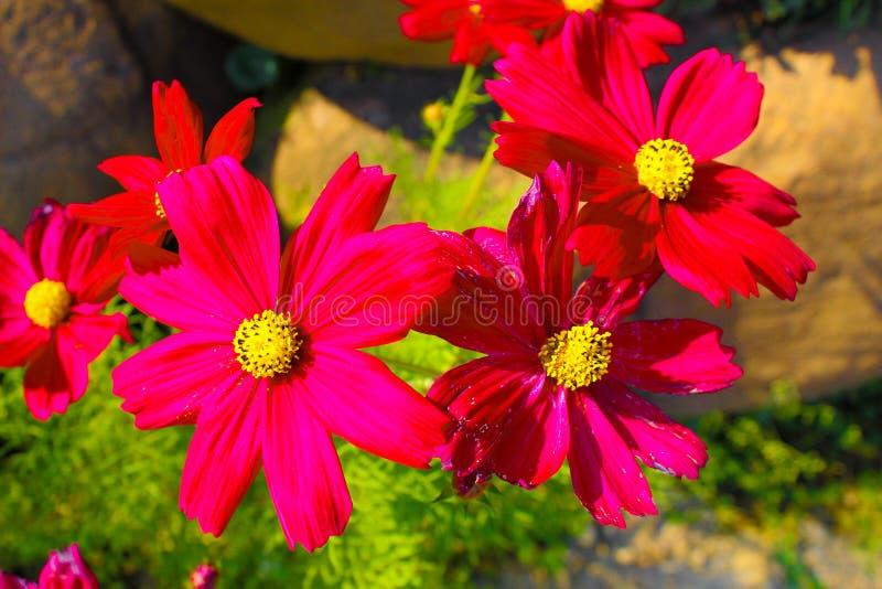 Blommabilder Thailand royaltyfria foton