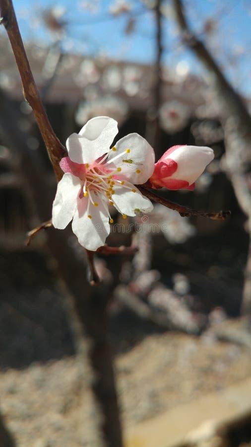 Blommablom arkivfoton