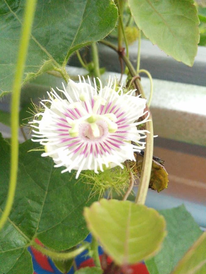 Blommablom royaltyfria foton