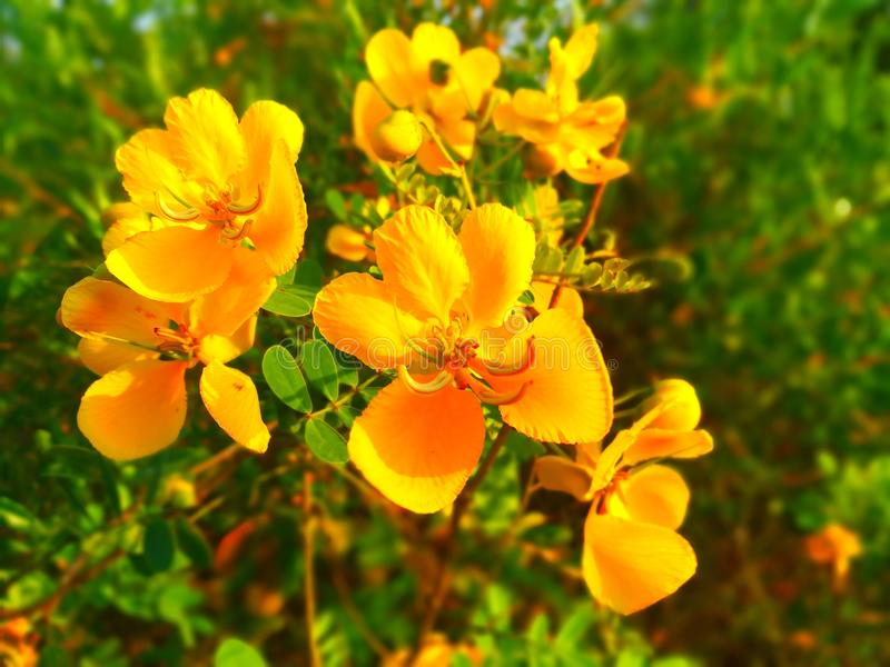 Blommablomningar royaltyfria bilder