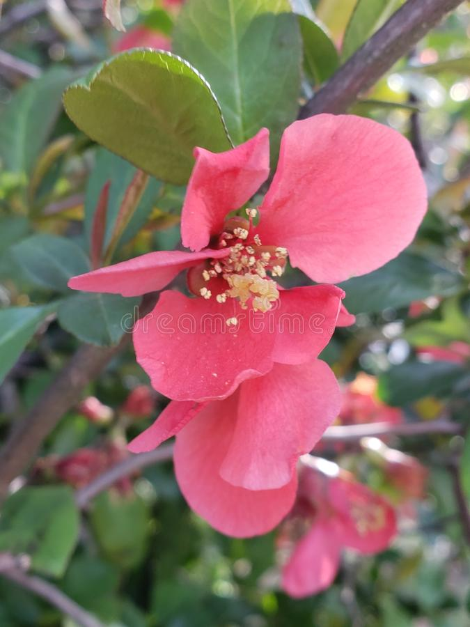 Blommablomningar royaltyfri bild