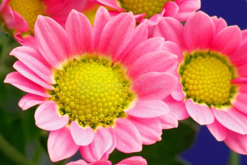 Blommabukett arkivfoton