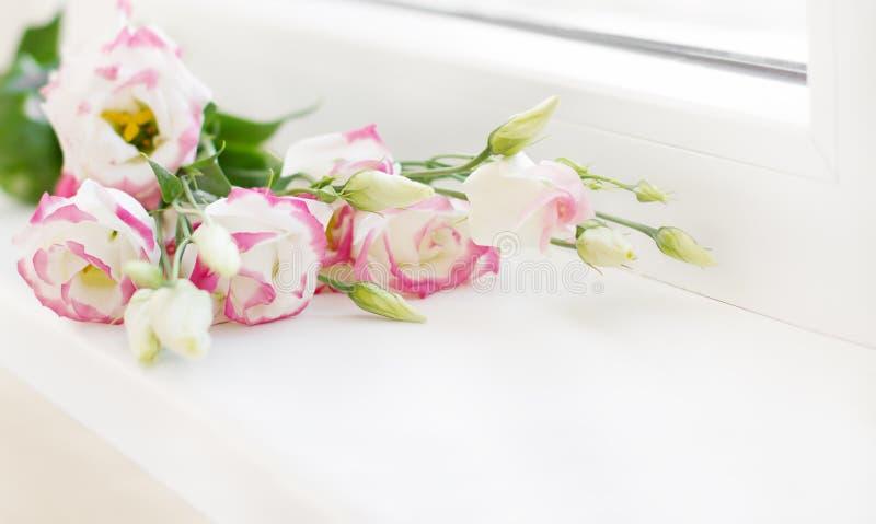 Blommabukett som ligger på den vita fönsterfönsterbrädan, Lisianthuses grupp fotografering för bildbyråer