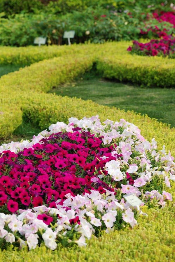 blommabuske royaltyfria bilder