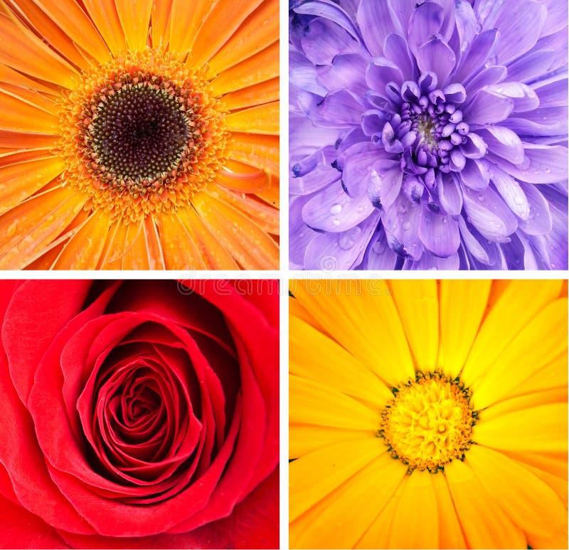 Blommacollage arkivfoto